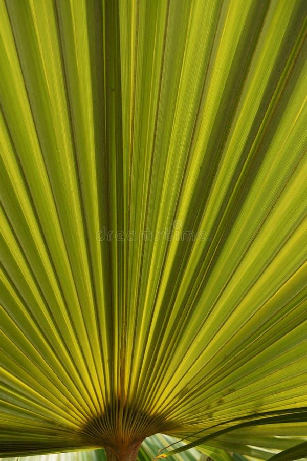 Folha de palmeira fotografia de stock