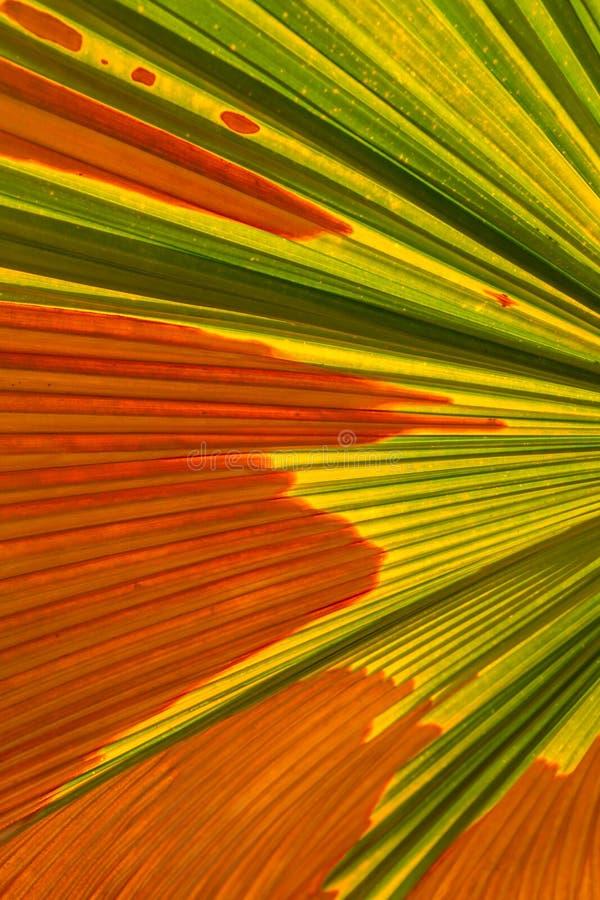 Folha de palmeira abstrata foto de stock