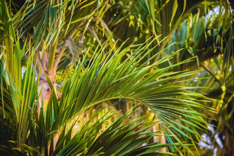 Folha de palmeira Backgroound foto de stock