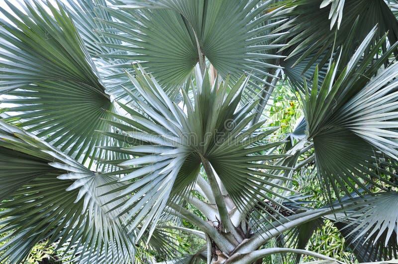 Folha de palmeira bonita imagem de stock