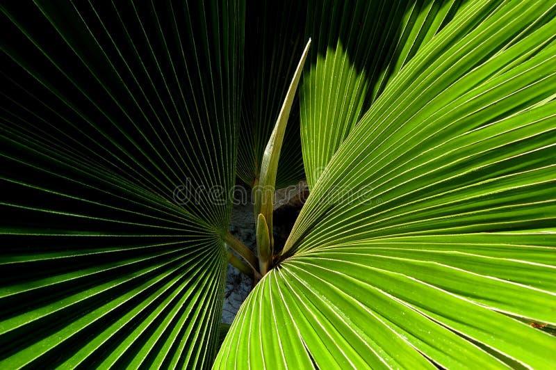 Folha de palmeira - detalhe foto de stock royalty free