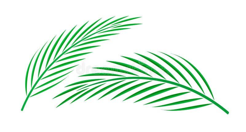 Folha de palmeira do coco isolada no fundo branco, haste do coco, clipart do verde da folha da árvore do plam, ilustração da folh ilustração stock