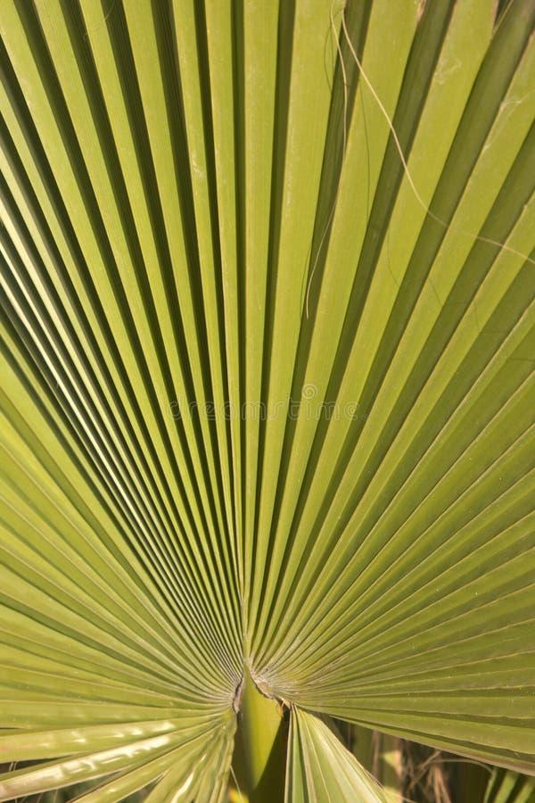 Folha de palmeira em Ibiza imagens de stock