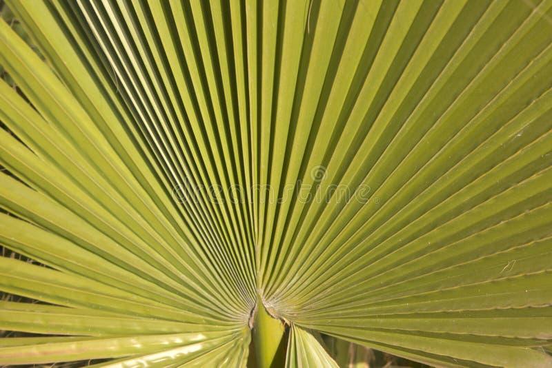 Folha de palmeira em Ibiza imagens de stock royalty free