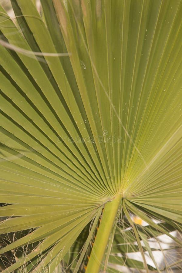 Folha de palmeira em Ibiza imagem de stock royalty free