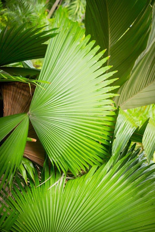 Folha de palmeira no jardim fotos de stock royalty free
