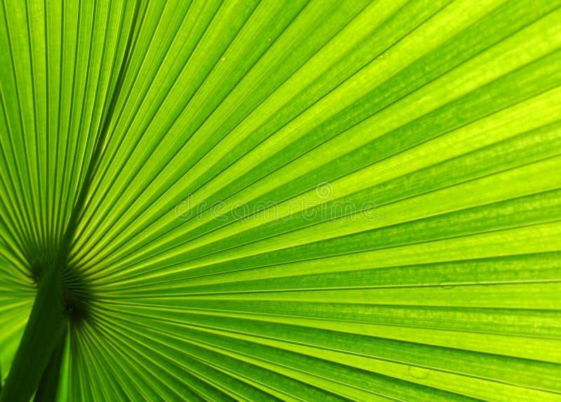Folha de palmeira tropical imagens de stock royalty free