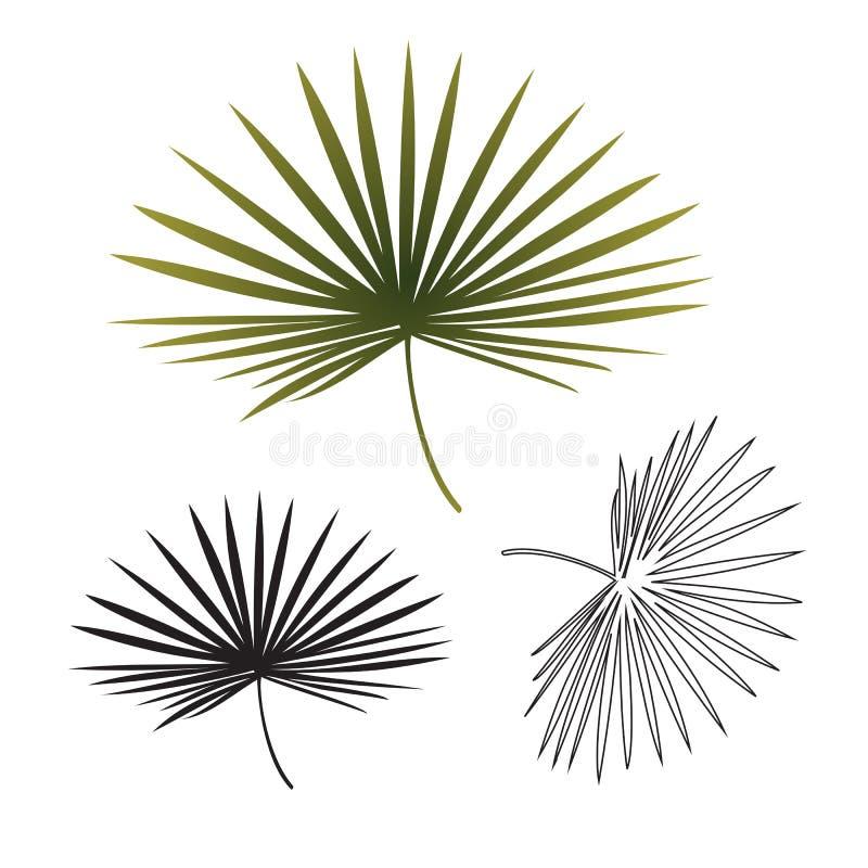 Folha de palmeira tropical exótica preto e branco isolada Ilustração tirada mão do esboço ilustração do vetor
