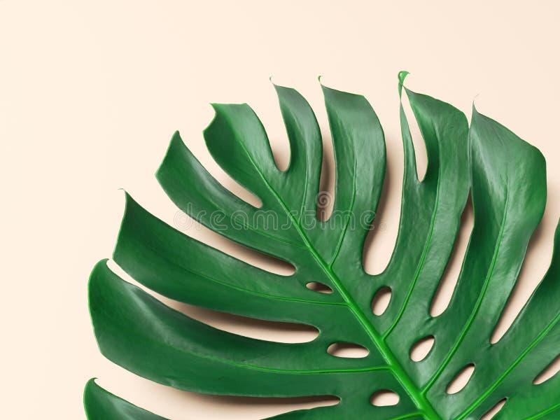 Folha de palmeira verde com fundo cor-de-rosa ilustração stock