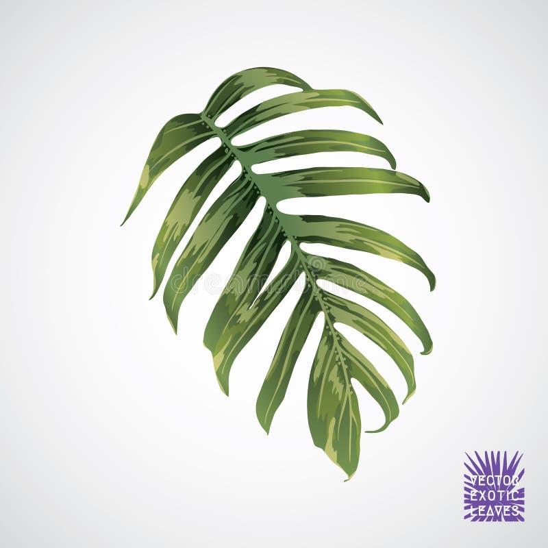 Download Folha De Palmeira Verde Do Vetor Ilustração do Vetor - Ilustração de jardim, botanical: 107526442
