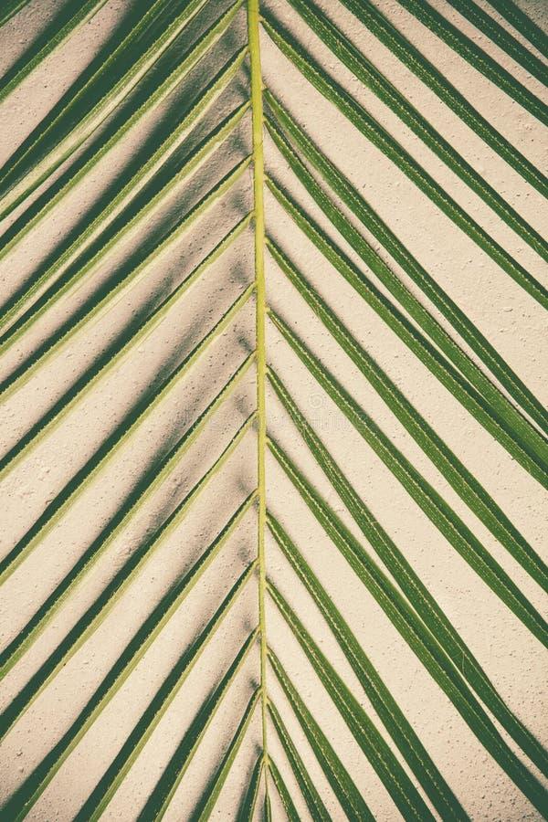 Folha de palmeira verde no fundo concreto foto de stock