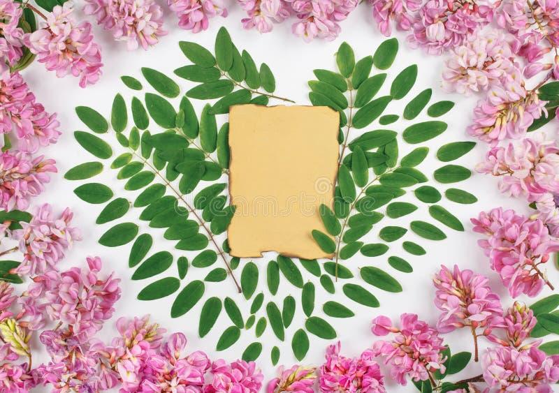 Folha de papel do vintage com flores da acácia fotos de stock