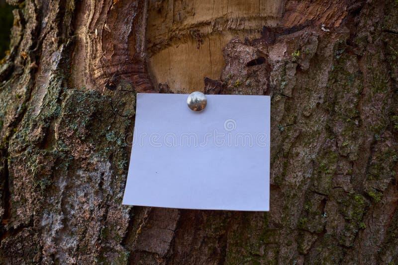 Folha de papel vazia a observação sticked à casca da árvore imagens de stock