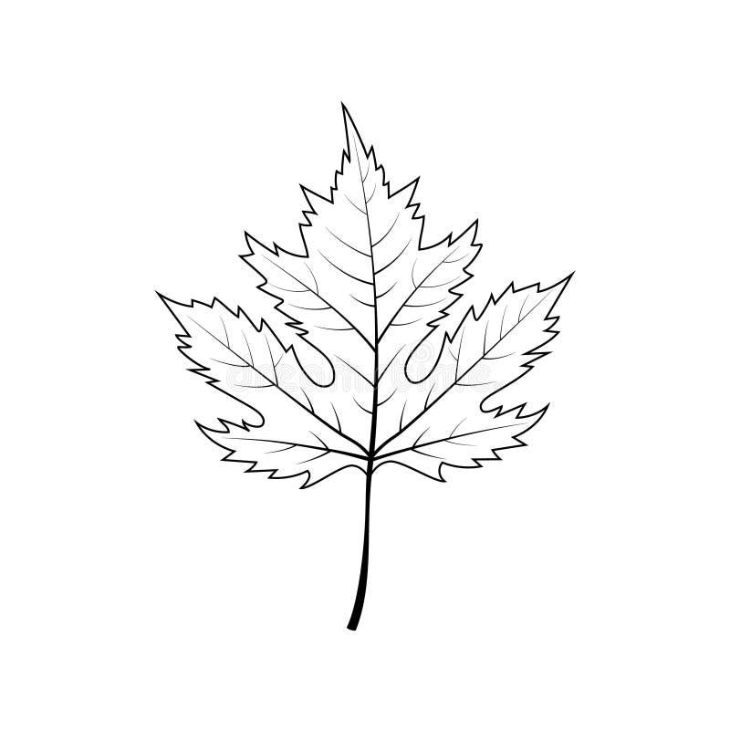 Folha de pl?tano do outono isolada no fundo branco ilustração royalty free