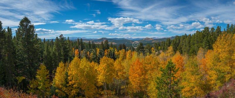 Folha de queda em Colorado fotografia de stock