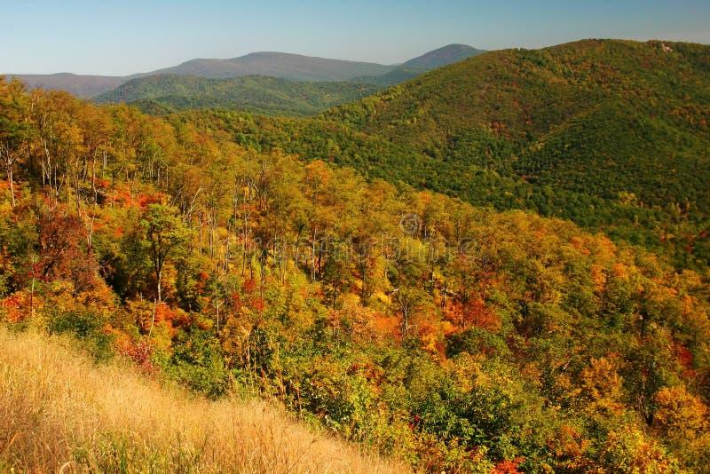 Folha de queda nas montanhas imagens de stock