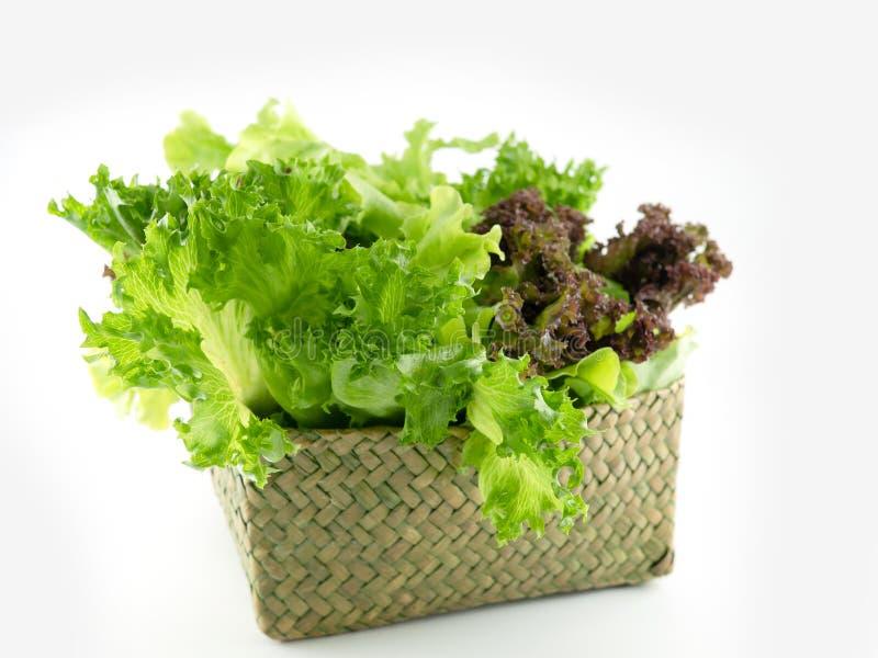 Folha de salada Alface em cesto verde isolada sobre fundo branco Alfaces frescas e verdes, pano de fundo de salada para inserção  fotografia de stock royalty free