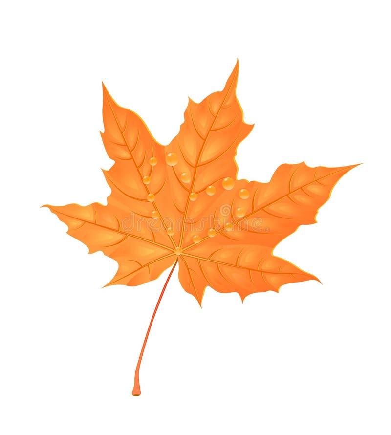 Folha do bordo do outono Ilustração creativa do vetor Folha alaranjada com gotas da água Elemento do projeto ilustração stock