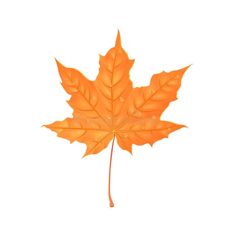Folha do bordo do outono Ilustração creativa do vetor Folha alaranjada com gotas da água Elemento do projeto ilustração royalty free