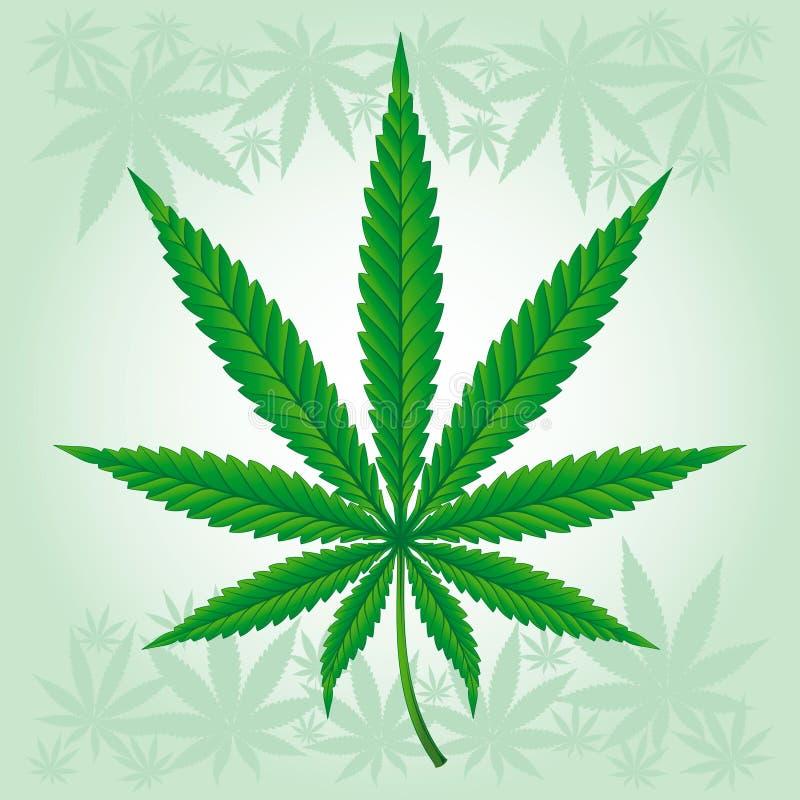 Folha do cannabis/marijuana/cânhamo detalhada ilustração do vetor