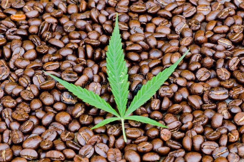 Folha do cannabis no café fotos de stock royalty free