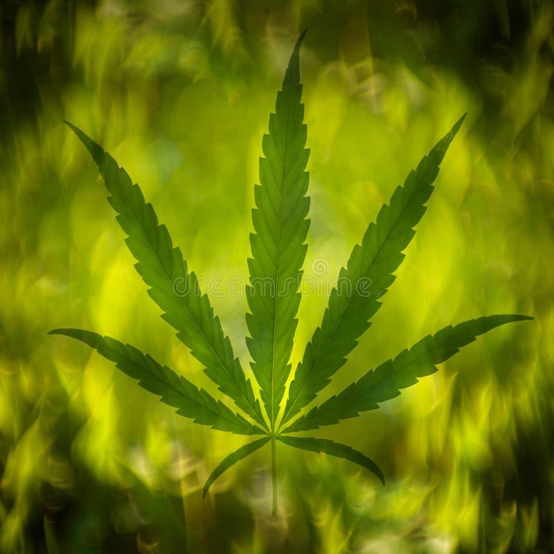Folha do cannabis no fundo abstrato imagens de stock