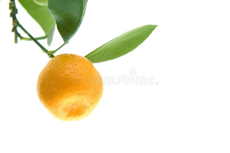 Folha do citrino imagem de stock