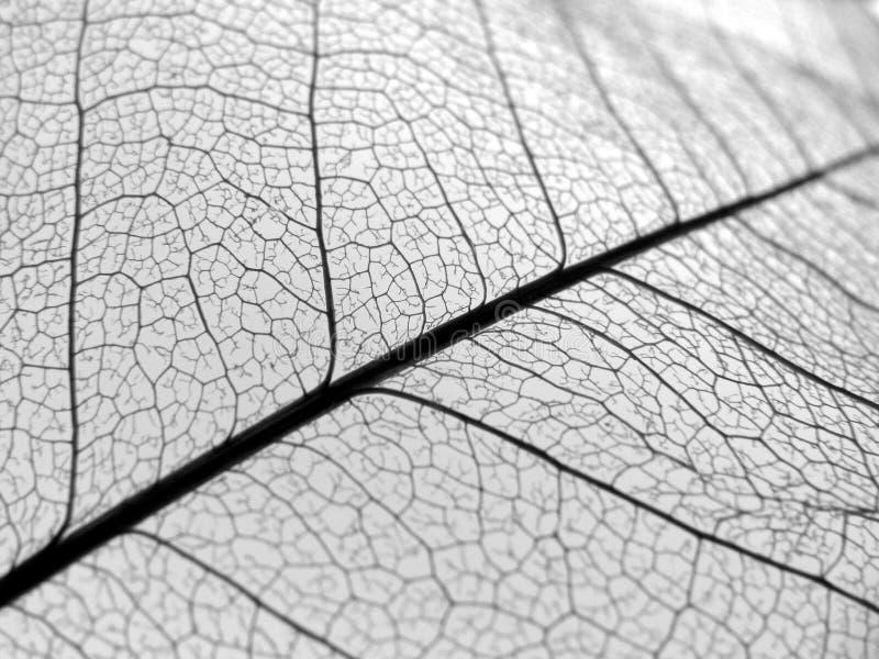 A folha do close up veia a textura fotografia de stock royalty free