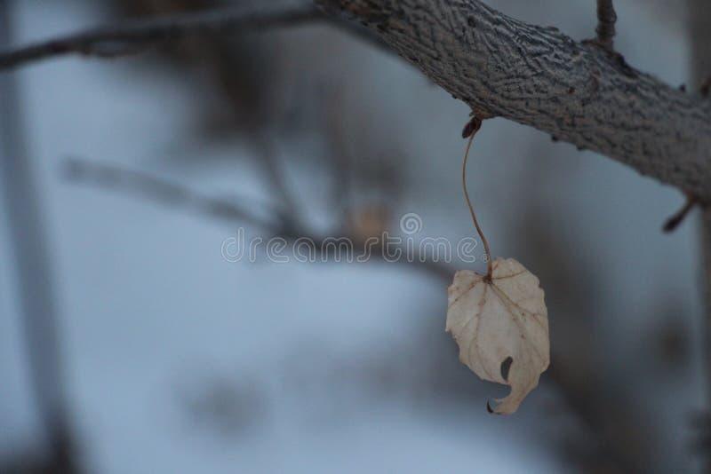 Folha do inverno fotos de stock