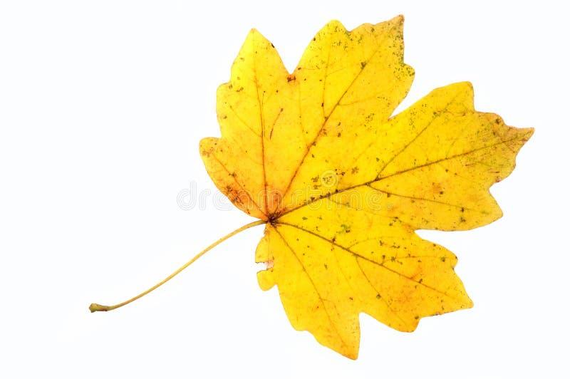 Folha do outono. fotografia de stock royalty free