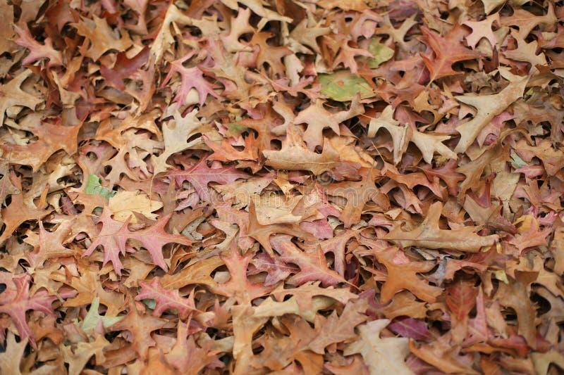 Folha do outono fotos de stock