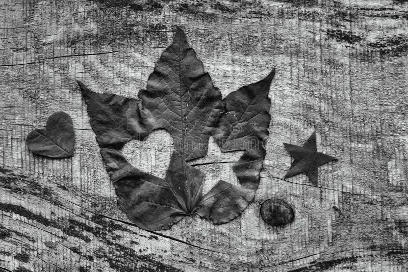 Folha do outono com coração e floco de neve em preto e branco fotos de stock