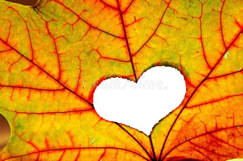 Folha do outono com um furo na forma do coração fotos de stock royalty free