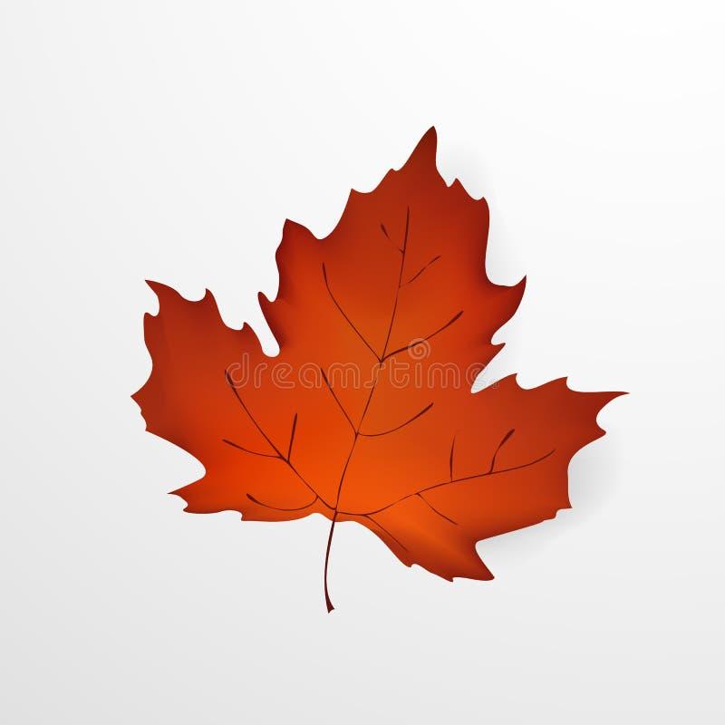 Folha do outono Folha de bordo bonita realística do outono isolada em um fundo branco Conceito de projeto para os Web site ilustração royalty free