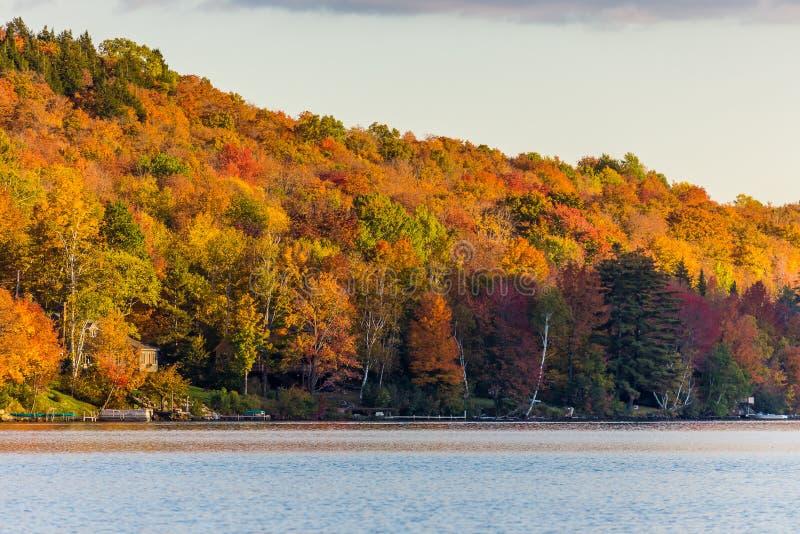 Folha do outono em Vermont, parque estadual de Elmore fotografia de stock