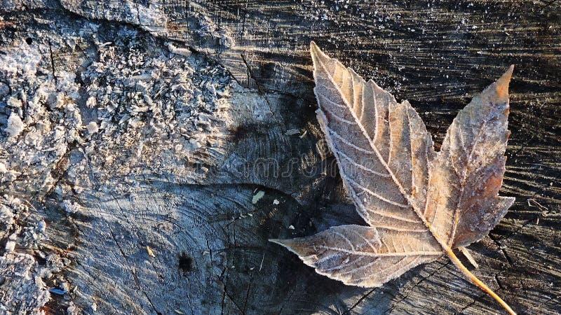A folha do outono encontra-se em uma árvore coberta com a geada imagens de stock royalty free