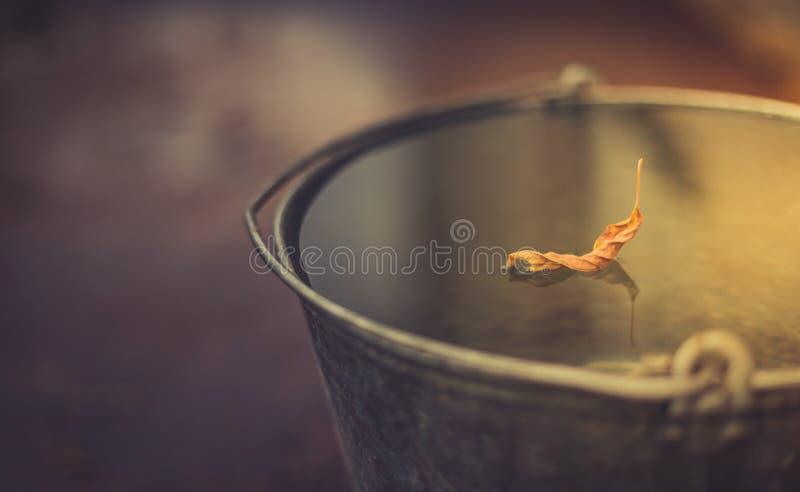 Folha do outono na cubeta completamente da água foto de stock royalty free