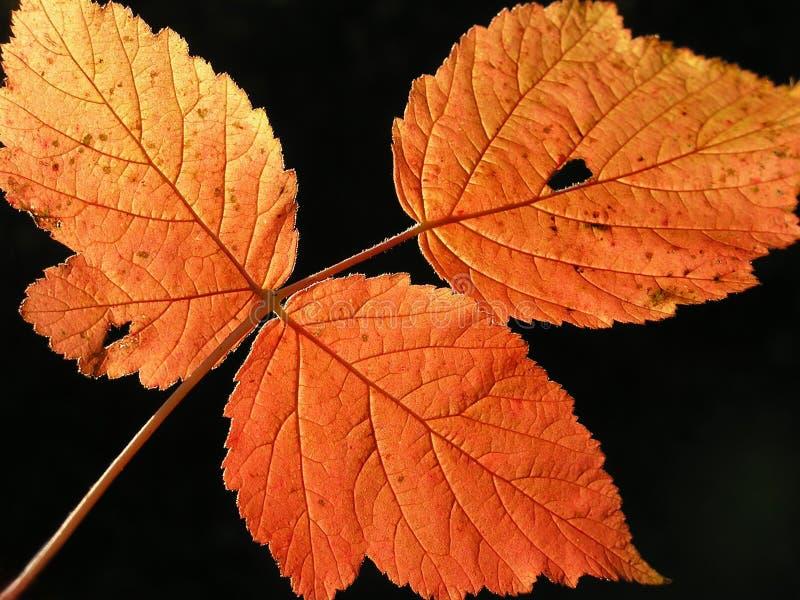 Folha do outono no fundo borrado imagem de stock