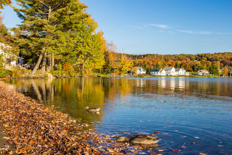 Folha do outono no parque estadual de Elmore em Vermont fotografia de stock