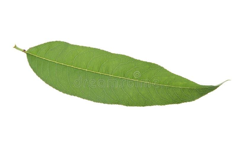 Folha do pêssego imagem de stock