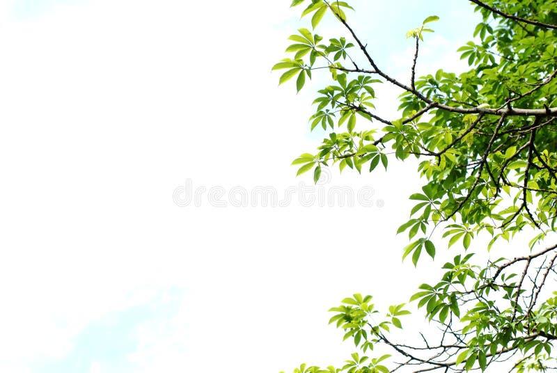 Folha do verão imagens de stock