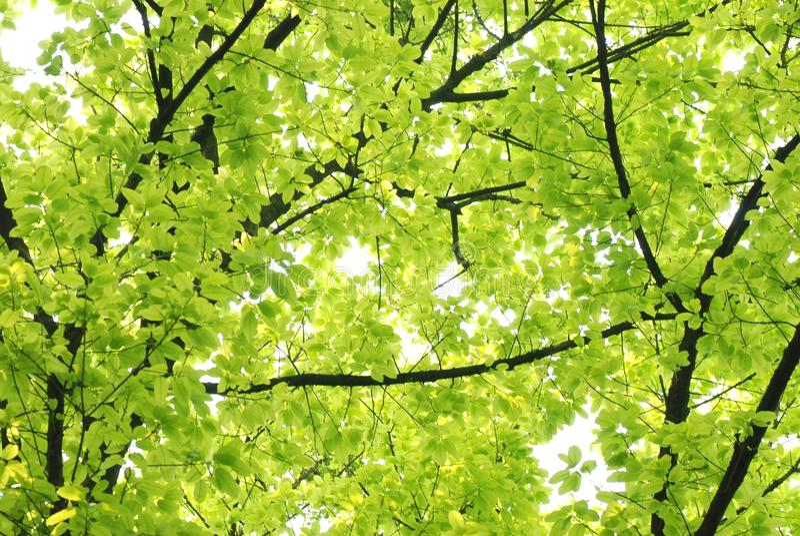 Folha do verde da natureza da mola fotografia de stock royalty free