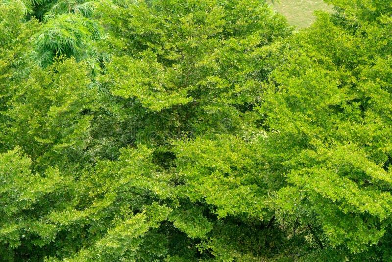 Folha do verde de Topview da árvore para o fundo fotos de stock royalty free