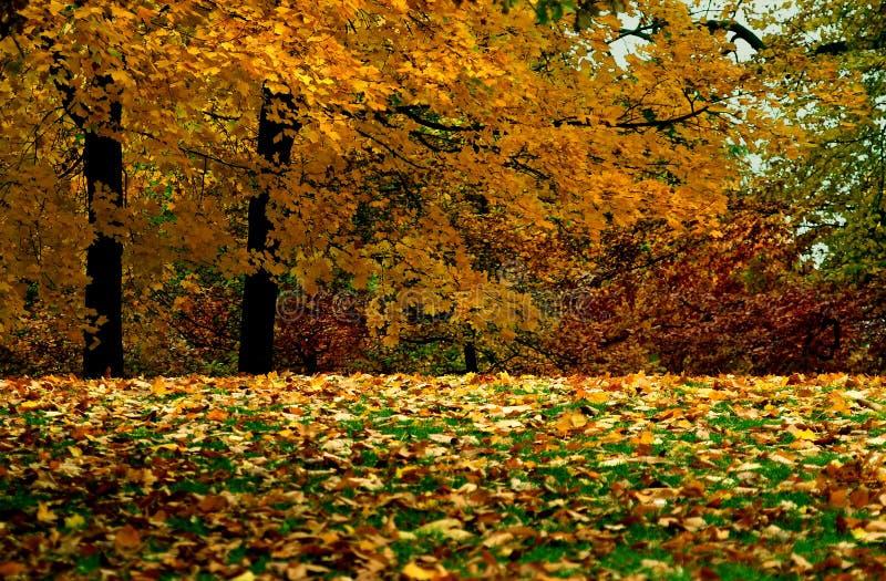 Folha dourada imagem de stock