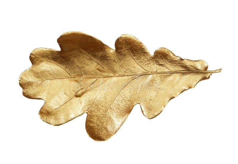 Folha dourada do carvalho isolada no branco fotografia de stock