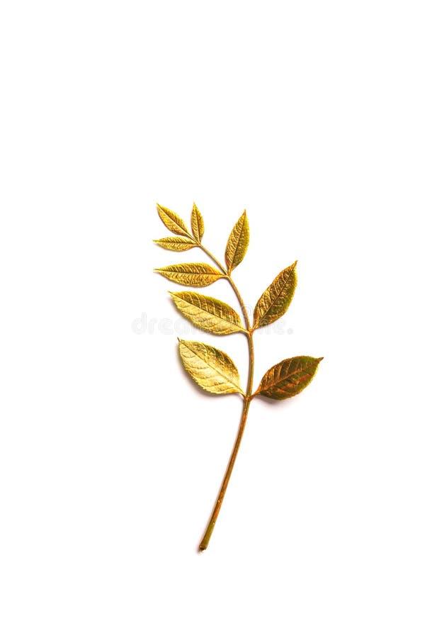 Folha dourada do outono com espaço da cópia fotos de stock royalty free