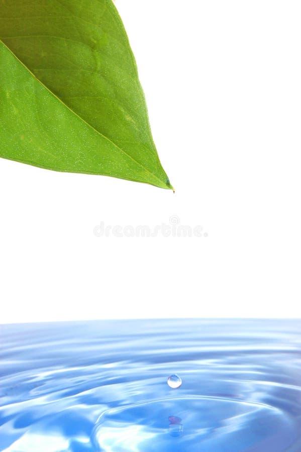 Download Folha e água imagem de stock. Imagem de vida, espirrar - 10056391