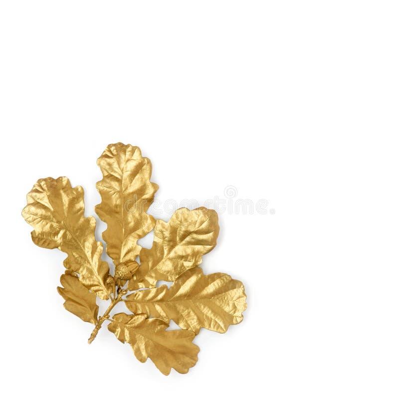 Folha e bolota douradas do carvalho imagens de stock royalty free