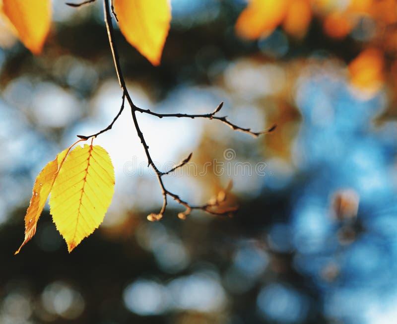 Folha e céu do outono fotos de stock