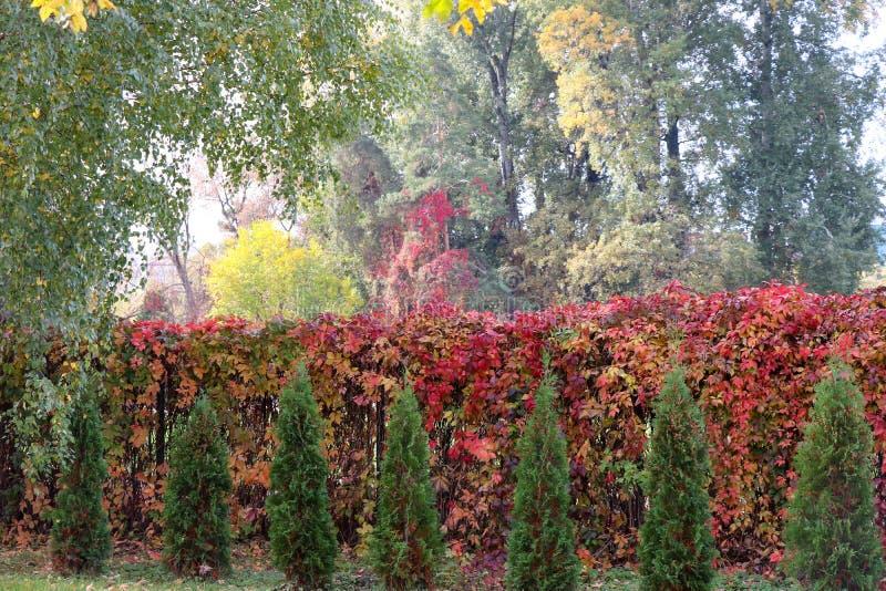 Folha e cores do outono fotografia de stock